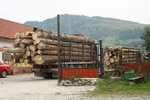 lemne rucar 1
