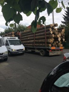 lemn 1